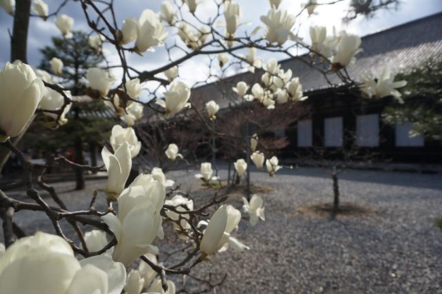 京都 kyoto 三十三間堂